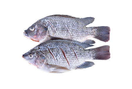 Gutted, scaled and sliced Nile Tilapia fish on white background