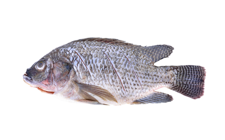 gutted: Gutted, scaled and sliced Nile Tilapia fish on white background