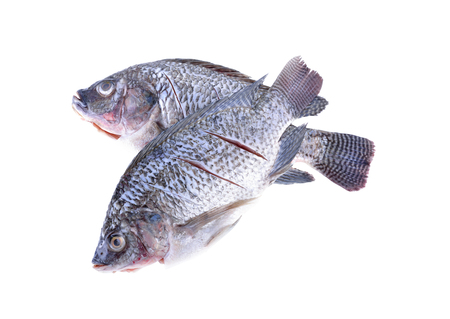white nile: Gutted, scaled and sliced Nile Tilapia fish on white background