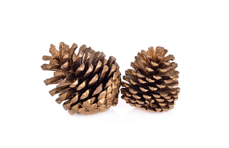 dry conifer cones on white background