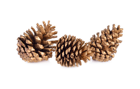 conifer: dry conifer cones for decoration on white background