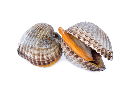 ark: uncooked blood cockle or ark shell on white background Stock Photo