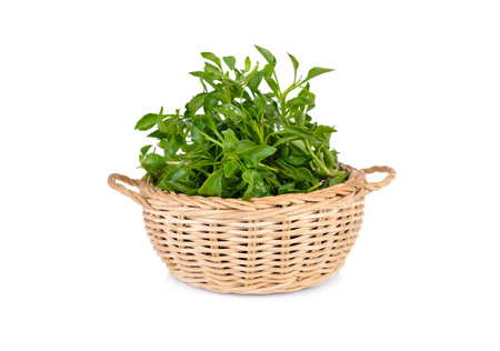 fresh watercress in bamboo basket and on white background Stock Photo