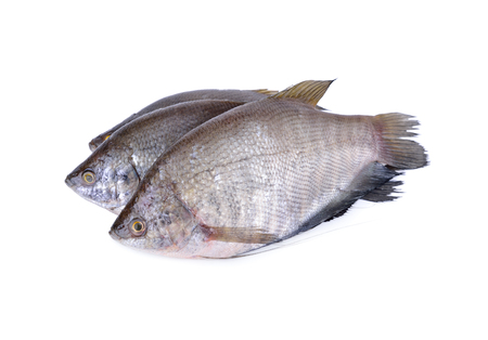 fresh gourami fish whole round on white background Imagens