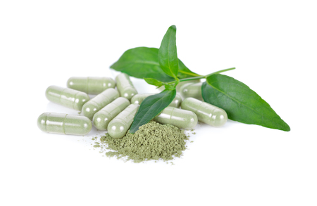 fresh kariyat leaves, ground and capsule herb on white background