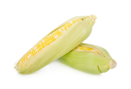 fresh bicolors sweet corn on white background