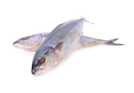 whole round Yellowtail fish or Hamachi fish on white background
