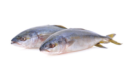 whole round Yellowtail fish or Hamachi fish on white background