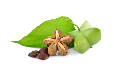 dried and fresh sacha inchi with leaf on white background