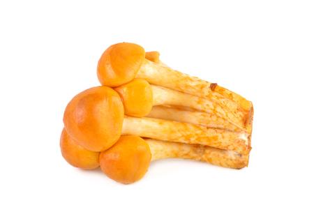 Edible mushrooms called golden needle mushroom, futu mushroom or lily mushroom on white background