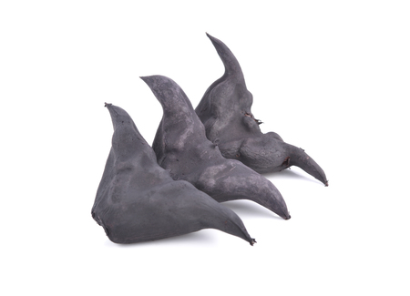 boiled bull horn Shaped Water Caltrop nut on white background