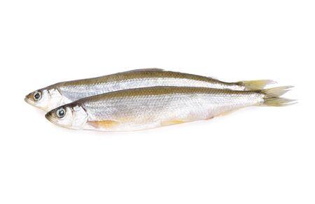 whole round fresh Japanese sand fish or Japanese whiting fish on white background