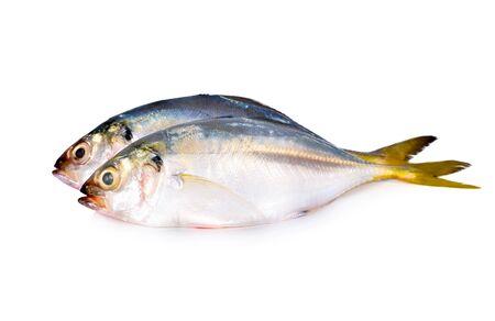 whole round fresh horse mackerel on white background Banque d'images