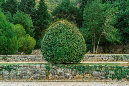 Park on the Adriatic coast. Stone-paved terrace walls and gravel paths. Lush Mediterranean vegetation. Trimmed round Bush