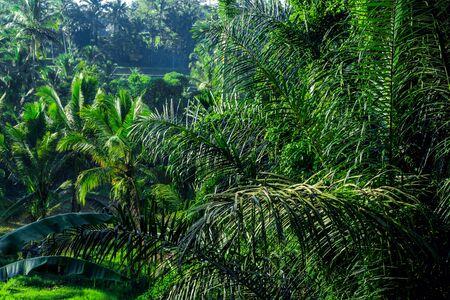 Bali tourist destination. Rainforest at dawn. Natural exotic eco background