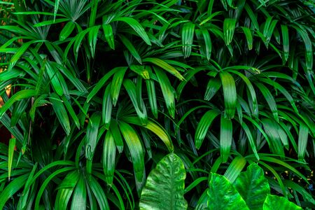 Exotic tropical background of green leaves of jungle plants. Leaves of tropical plants. Green tropical background. Фото со стока