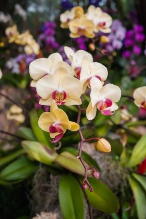 closeup blossom beautiful orchid Banco de Imagens