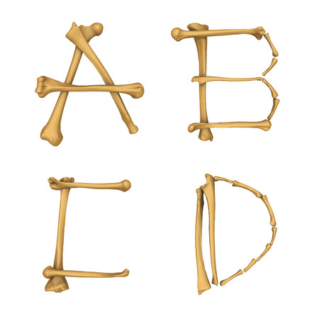 Skeleton alphabet A-D isolated on white background photo