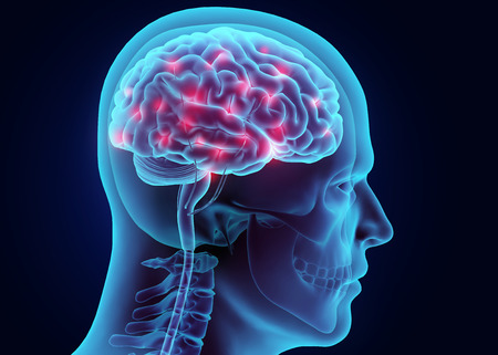 3D-Darstellung Gehirn Nervensystem aktiv, medizinisches Konzept.