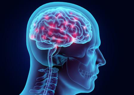 sistema nervioso: el sistema nervioso, el concepto médico activo 3D ilustración cerebro. Foto de archivo