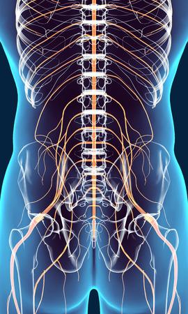 sistema nervioso central: sistema nervioso, concepto médico 3D ilustración masculino.