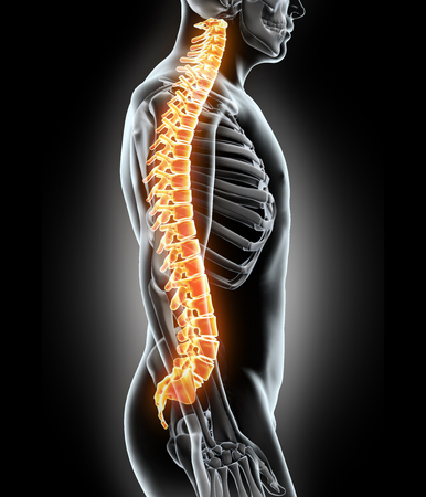 back injury: Skeleton system - X-ray human spine, medical concept.