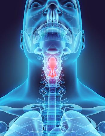 pharynx: 3D illustration of Epiglottis - Part of Human Organic.