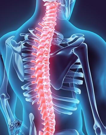 3D illustration de la colonne vertébrale - Partie du bio humain. Banque d'images