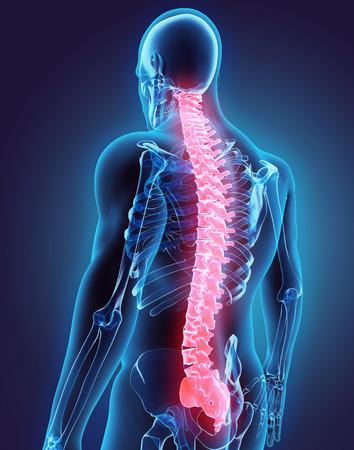 3D illustration of Spine - Part of Human Organic. Stockfoto