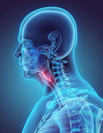 Epiglottis- 인간의 유기의 부분의 3D 일러스트 레이 션.
