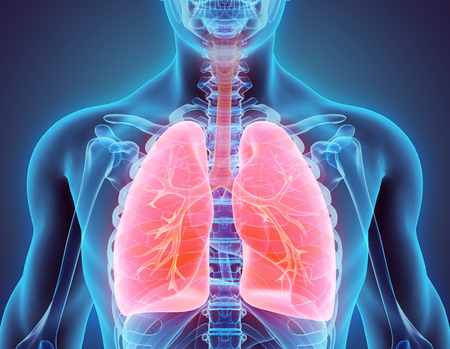 persona respirando: Ilustración 3D de los pulmones - Parte de Orgánica humano.
