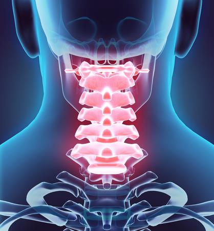 3D illustration de la colonne cervicale - Partie du Squelette humain. Banque d'images