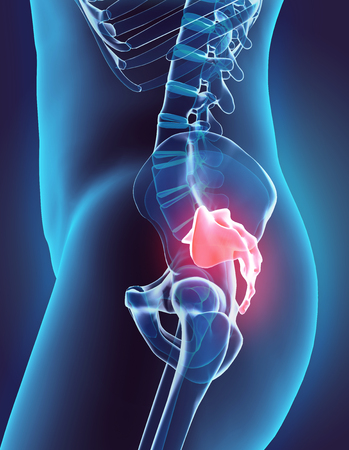 sacral: 3D illustration of Sacral Spine - Part of Human Skeleton.