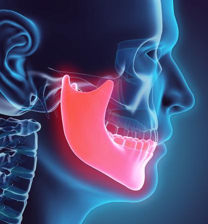 mandible: 3D illustration of Mandible - Part of Human Skeleton. Stock Photo