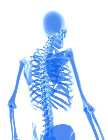 humerus: 3D illustration of shiny blue skeleton system, medical concept. Stock Photo