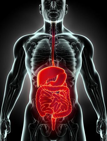 esofago: sistema 3D macho humano de rayos x digestivo, concepto médico.