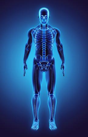 3D illustration - Part of Human Skeleton. Stock Photo