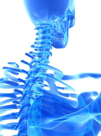 neck injury: 3D illustration of Cervical Spine - Part of Human Skeleton.