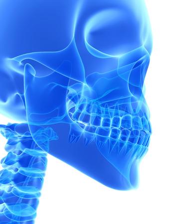 3D illustration of Mandible - Part of Human Skeleton. Banco de Imagens