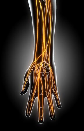 nerve signals: 3D illustration of hand nervous system, medical concept. Stock Photo