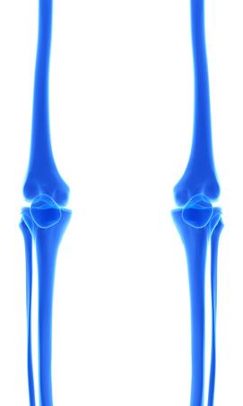 tibia: 3D illustration of Tibia - Part of Human Skeleton.