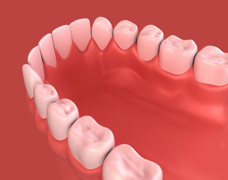 lower teeth: 3D illustration of lower gum and teeth, dental concept.