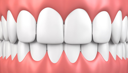 chew: 3D illustration teeth and gum model, dental concept. Stock Photo