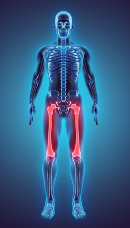 3D illustration of Femur - Part of Human Skeleton. Imagens