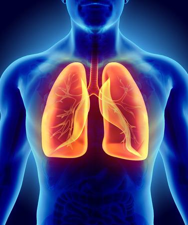 3D illustratie van glanzende oranje Lungs - onderdeel van de menselijke biologische, anatomie en medische concept.