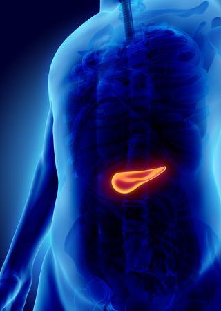 trzustka: 3D ilustracji trzustki - część układu pokarmowego, koncepcji medycznej.