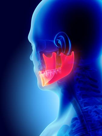 3D illustratie van Mandible - Een deel van menselijk skelet. Stockfoto