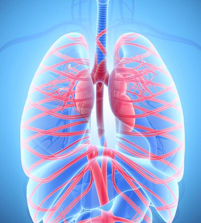 capillary: Human Internal System - Circulatory System medical concept - 3D illustration.