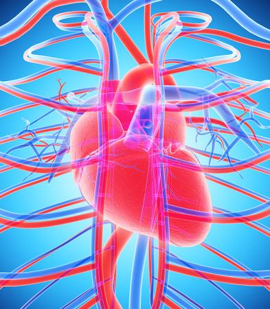 Intern menselijk System - bloedsomloop medische concept - 3D-afbeelding.