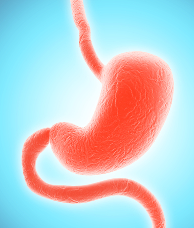 esophagus: 3D illustration of Stomach, Part of Digestive System. Stock Photo
